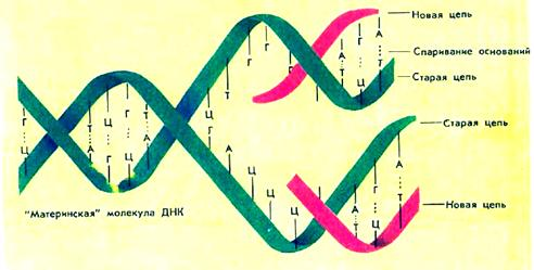 dna sythesis